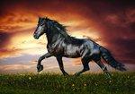Paard fotobehang Black Beauty L en behang poster Black Beauty L