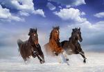 Paarden in de sneeuw fotobehang