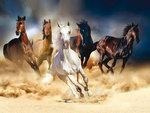 Paarden vlies fotobehang XL