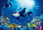 Onderwater fotobehang XL Orka's