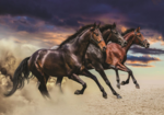 Paarden fotobehang L Pegasus roze
