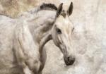 Paarden vlies fotobehang XL Paard