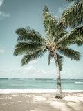 Strand fotobehang Palmboom