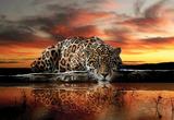 Jaguar fotobehang