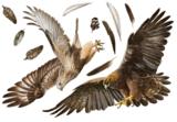 Roofvogel muurstickers