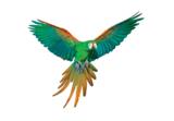 Papegaai muurstickers