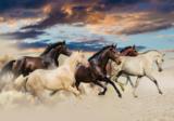 Paarden fotobehang In galop - Vlies XL
