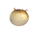 Finding Nemo muurstickers XL
