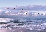 Strand fotobehang Zeemeeuwen