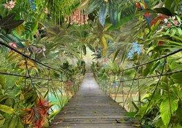 Jungle behang Wild Bridge
