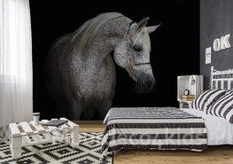 Paarden fotobehang Schimmel