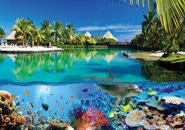 Onderwater fotobehang Dolfijn Malediven