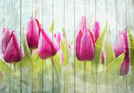 Tulpen op wit hout fotobehang