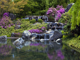 Waterval en bloemen fotobehang XL