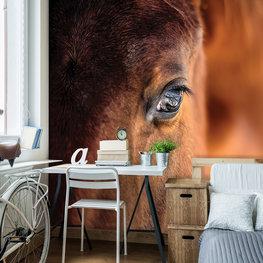 Bruin Paard fotobehang Oog