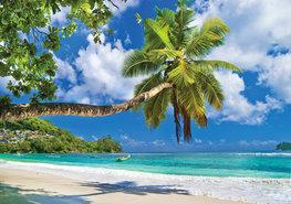 Strand behang Palmboom bij zee