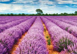 Lavendel behang Provence