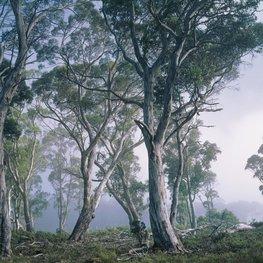 Bos fotobehang Fantasy Forest