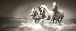Paarden fotobehang zwart/wit H