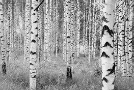 Woods vlies fotobehang zwart/wit