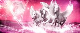 Paarden fotobehang Pegasus H roze
