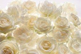 Fotobehang Shalimar - Witte rozen
