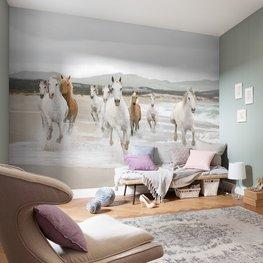 Witte paarden fotobehang XL
