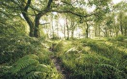 Mystic Path fotobehang - SH