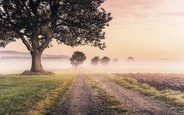Misty Morning fotobehang - SH