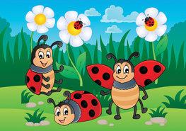 Fotobehang Lieveheersbeestjes
