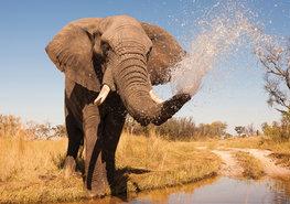 Jungle vlies fotobehang Olifant