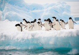 Fotobehang Pinguins