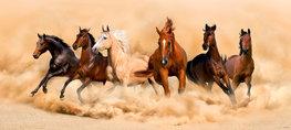 Paarden poster H
