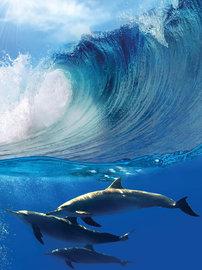 Dolfijnen fotobehang L1