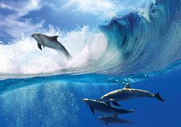 Dolfijnen fotobehang