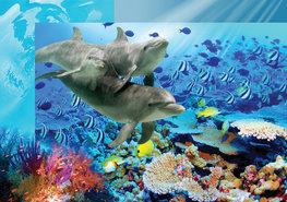 Dolfijnen en vissen fotobehang