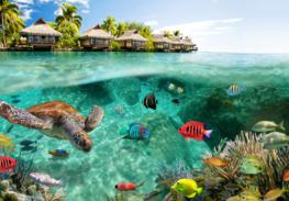 Onderwater vliesbehang Zeeschildpad