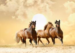 Paarden vliesbehang Running Horses