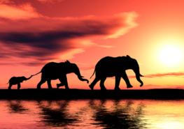 Olifanten behang Sunset Family
