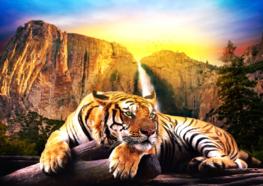Jungle fotobehang Siberische tijger