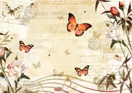 Vlinder fotobehang - Postcard Music