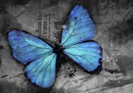 Vlinder fotobehang Blauw II