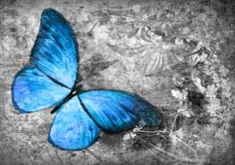 Vlinder fotobehang Blauw I
