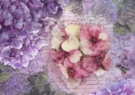 Hortensia fotobehang Memoire