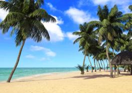Strand fotobehang Palmbomen