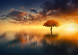 Fantasy fotobehang Sunset Tree