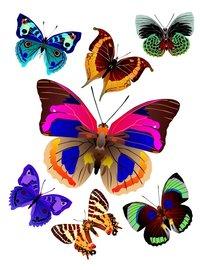 Vlinder muurstickers XL
