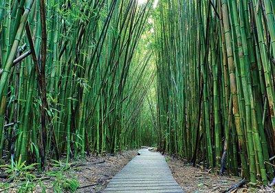 Bamboe bos fotobehang