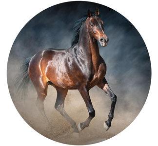 Behangcirkel Paard