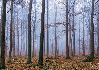 Bos fotobehang Misty Forest